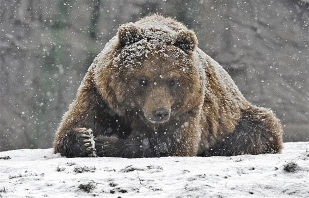 01j-winter-animals-12-10