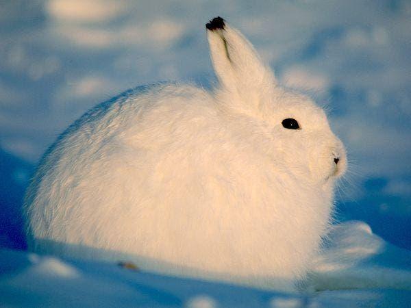 1 animals in winter 3