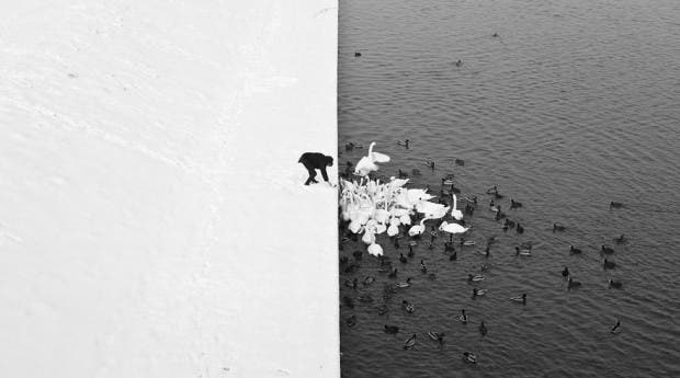 animals-in-winter-10