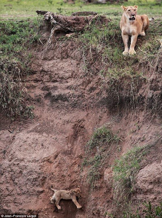 Cachorro en una fosa