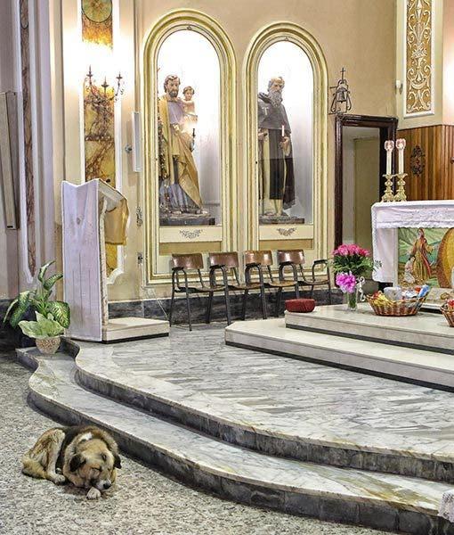 ciccio-dog-goes-to-church-1-510x600