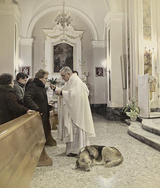 ciccio-dog-goes-to-church-3-510x600