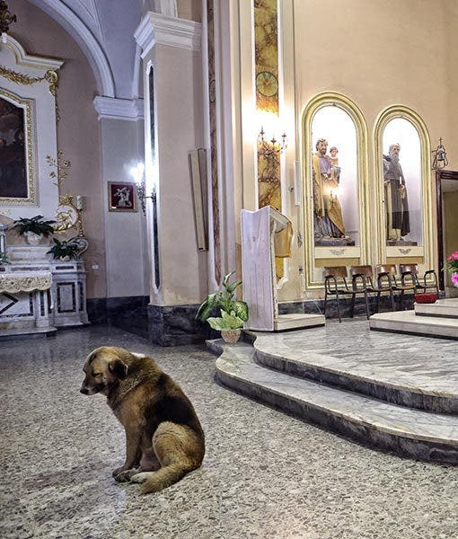 ciccio-dog-goes-to-church-4-510x600