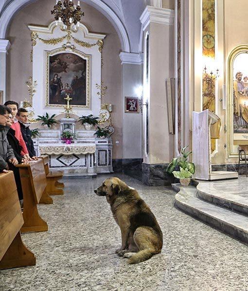 ciccio-dog-goes-to-church-5-510x600
