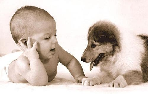 dog-and-baby