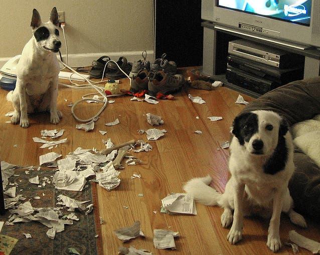 dos-perros-culpables