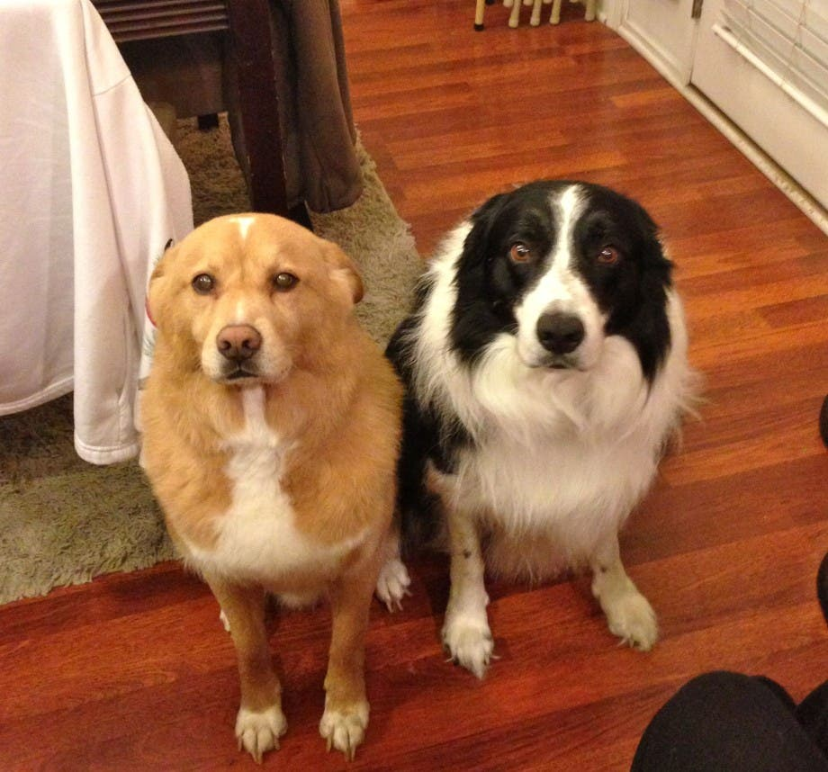 dos-perros-reciben-bronca