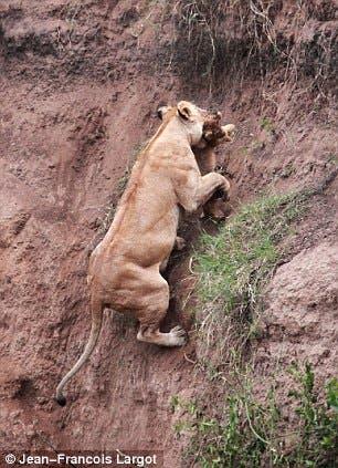 leona-sacando-cachorro