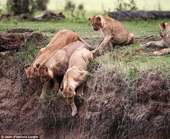 leonas-solidarias