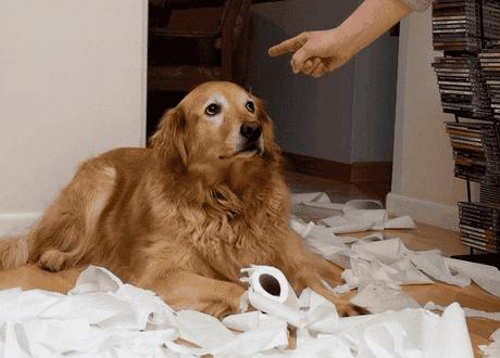 perro-es-advertido