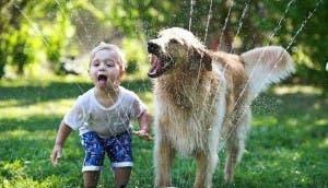 perro-nino-jugando-agua