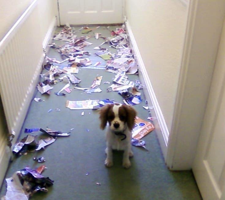 perro-papel-roto