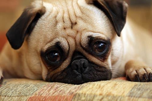 sad-dog1