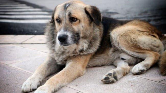 tommy-perro-misa