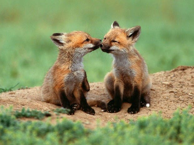 Cute-and-Funny-Animal-Kiss-07