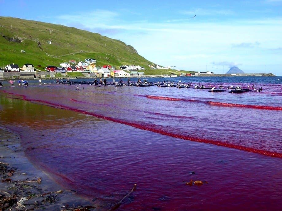 Hvalba_beach_whaling,_Faroe_Islands