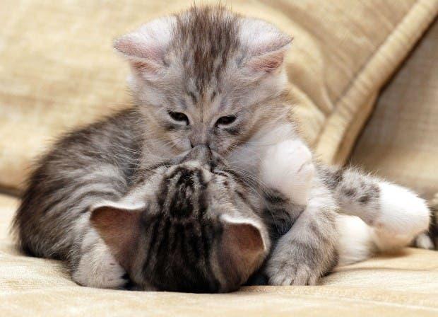 Kittens-kiss