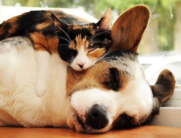 animal-pillows11