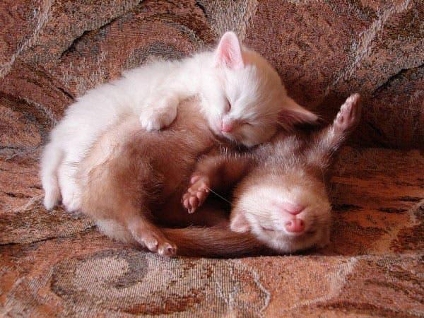 animal-pillows14