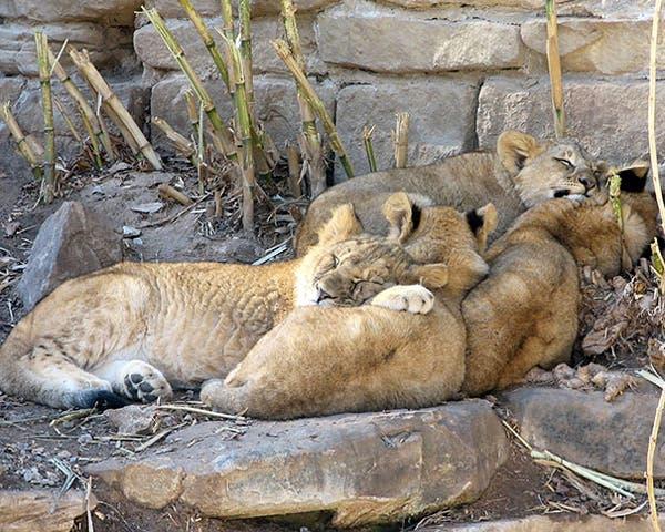 animal-pillows15