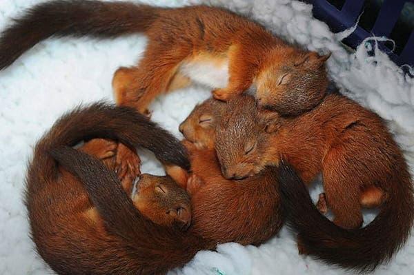 animal-pillows2