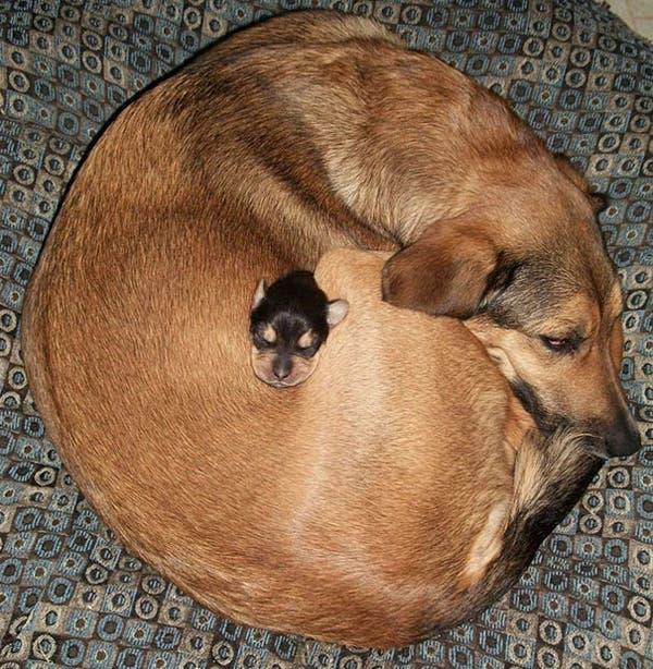 animal-pillows20