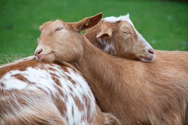 animal-pillows26