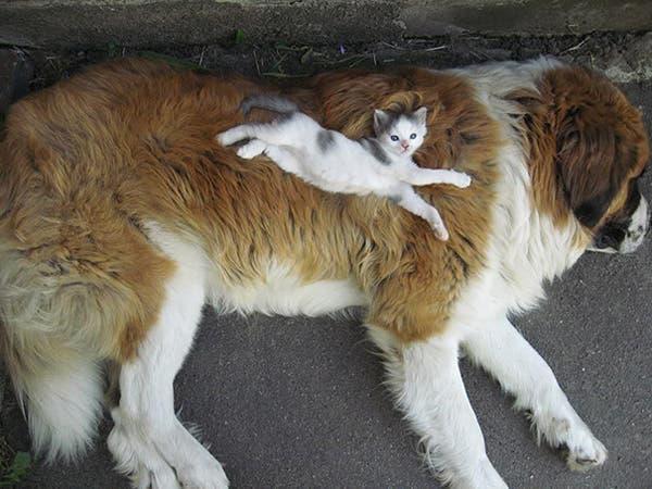 animal-pillows27