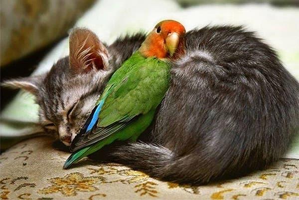 animal-pillows29