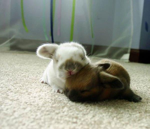 animal-pillows4