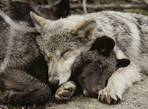 animal-pillows5