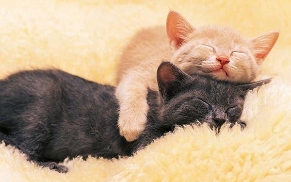 animal-pillows7