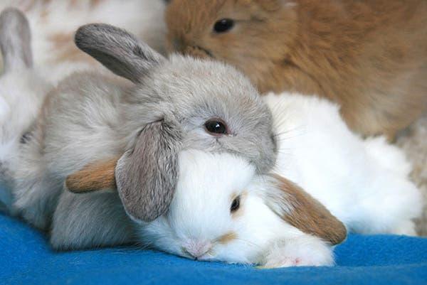 animal-pillows9
