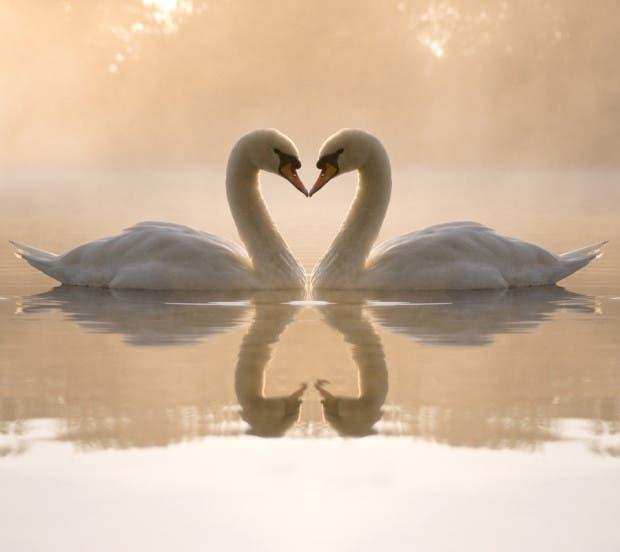 animal_kissing_wallpapers