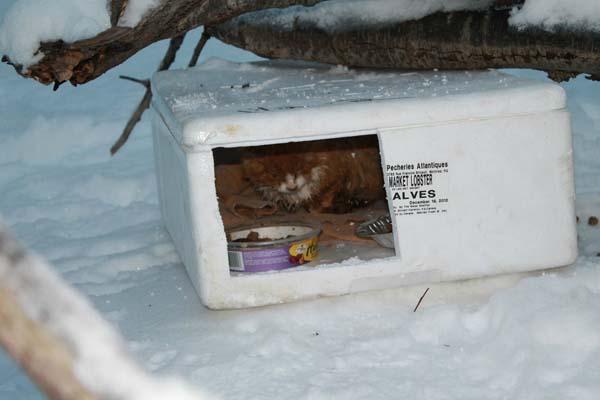 box-found3
