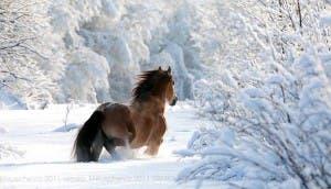 caballo-invierno-nieve