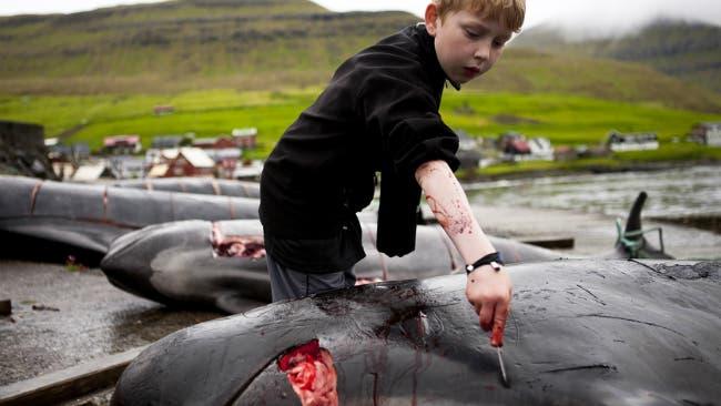 nino-colabora-matanza-ballena