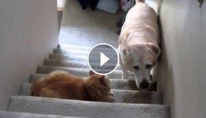 perro-teme-a-gato-play