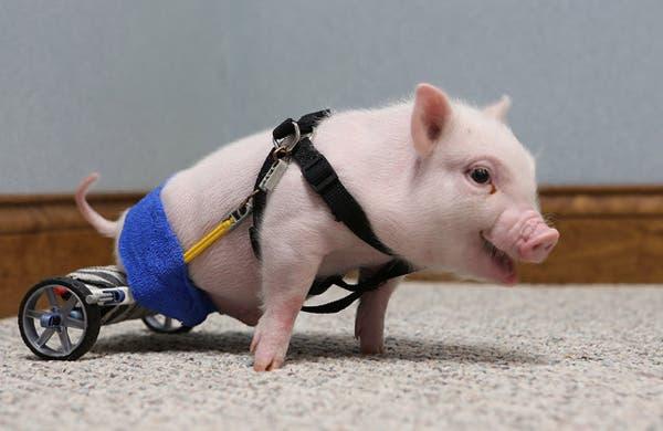 15-Chris-P-Bacon