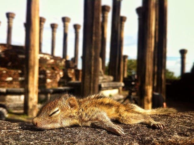 abandoned-squirrel-sri-lanka-paul-williams-11