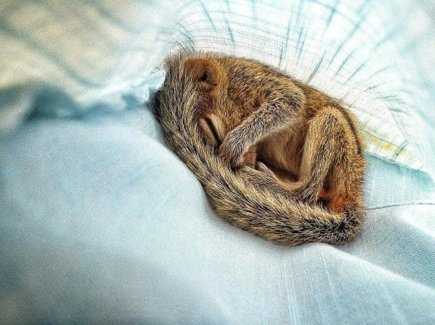 abandoned-squirrel-sri-lanka-paul-williams-16