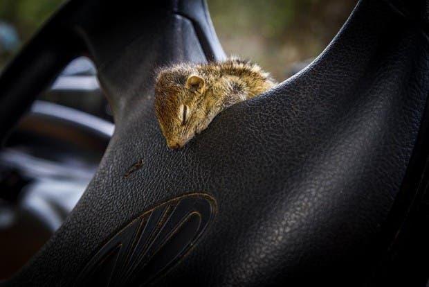 abandoned-squirrel-sri-lanka-paul-williams-2