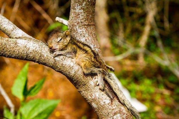 abandoned-squirrel-sri-lanka-paul-williams-3