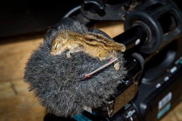 abandoned-squirrel-sri-lanka-paul-williams-4