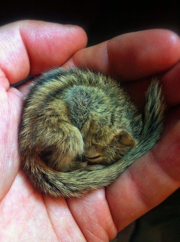 abandoned-squirrel-sri-lanka-paul-williams-5