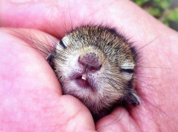 abandoned-squirrel-sri-lanka-paul-williams-7