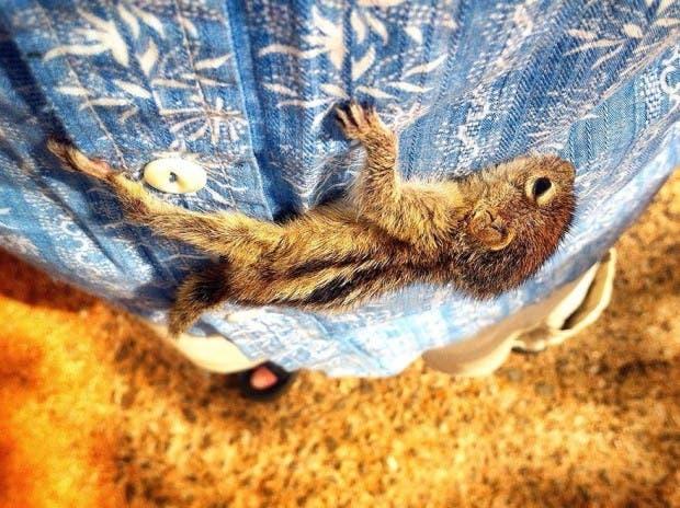 abandoned-squirrel-sri-lanka-paul-williams-8