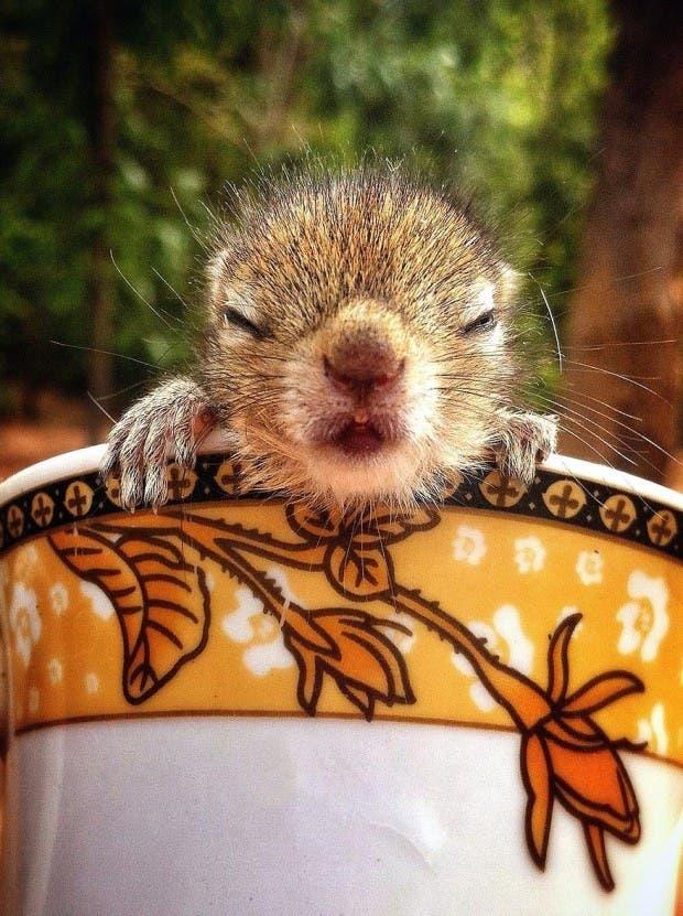 abandoned-squirrel-sri-lanka-paul-williams-9