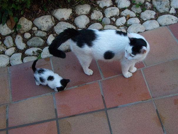 animals-with-miniature-versions-of-themselves-13