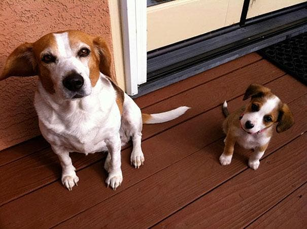 animals-with-miniature-versions-of-themselves-20